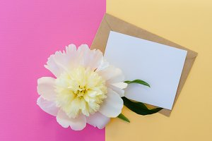 White peony flower with text card