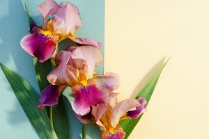 Bouquet of bright irises
