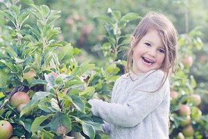 Little girl in apple orchard