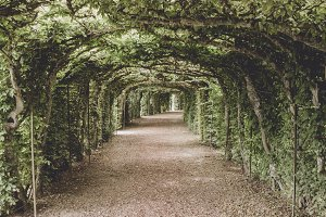 Tunnel of Green Flora