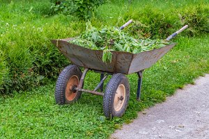 An old garden trolley with green