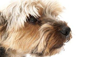 funny dog yorkshire