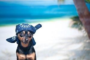 Dog in a bandana on the beach