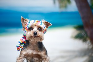 Dog in a bandana on the beach
