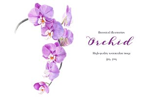 Botanical illustration Orchid
