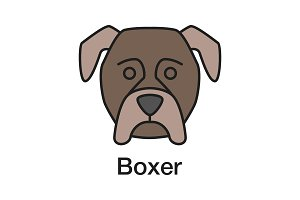 Boxer color icon