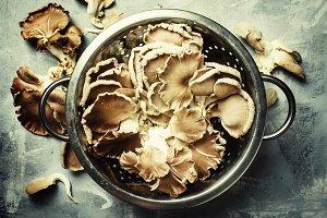Fresh raw oyster mushrooms in a cola