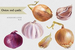 Onion and garlic. Watercolor Botanic