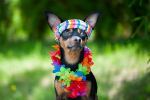 Dog, a puppy in the Hawaiian style .