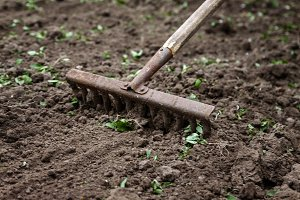 On the soil lie the garden rake. Clo