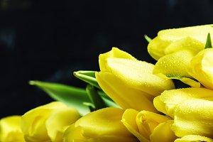 Large bouquet of yellow tulips, sele