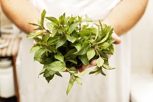 a bunch of fresh mint in male hands,