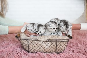 Two women put five kittens in a box