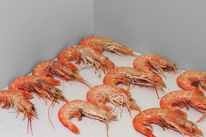 Tiger shrimps on the gray background