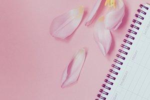 Pink tulip with open empty desk plan