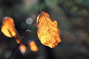 Autumn leaves 2.