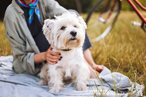 Close up beautiful little white dog