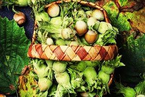 Fresh hazelnuts in wicker basket, to