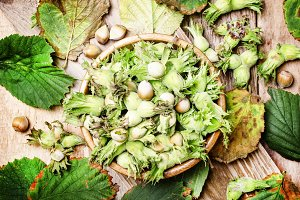 Forest nuts hazelnuts in shell with