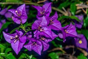 Macro view of a little purple flower