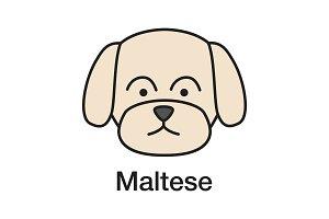 Maltese color icon