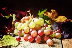 Autumn grape, still life, vintage wo