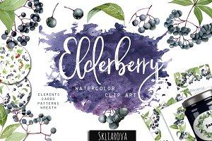 Elderberry. Watercolor clip art.