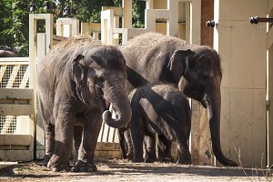 Family of elephants with a baby in t
