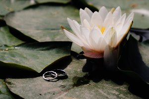 wedding rings on white lotus flower
