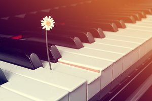 Daisy on piano keyboard