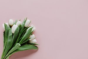 top view of bouquet of white tulip f