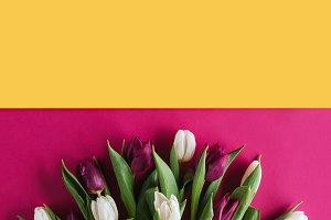 top view of fresh spring tulips for