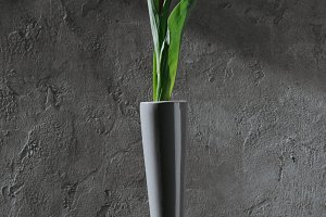 white spring tulip in grey vase on g