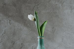 white spring tulip in blue vase on g