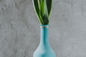 purple spring tulips in blue vase on
