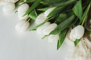 top view of white tulip flowers isol