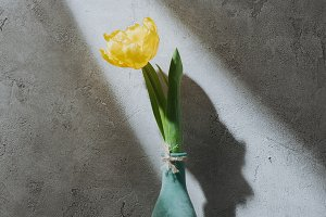 yellow spring tulip in blue vase on