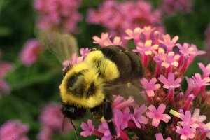 Busy Bumble Bee 2