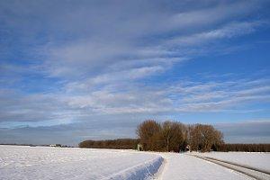 Winter landscape in the Biesbosch