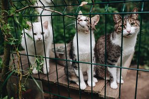 Homeless cats. Kittens looking out f