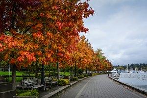 Autumn walkway by marina