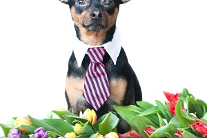 Funny puppy in a tie in flowers