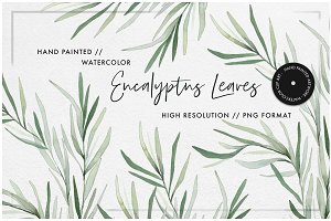 Watercolor Willow Eucalyptus Leaves