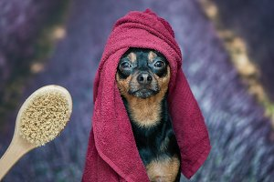 Funny puppy, dog in a towel