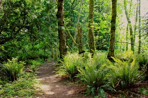 A Beautiful Pacific Northwest Trail