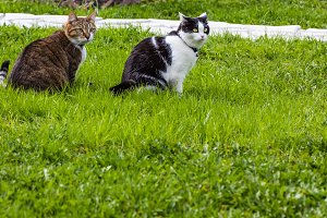 Two cats black-white and tabby sit