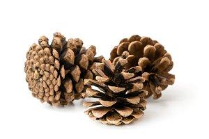 pine cones closeup