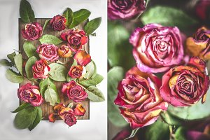 Red dry roses, pattern, diptych, pos