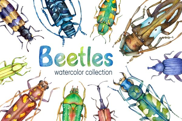 Beetles Watercolor collection