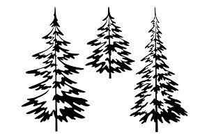Christmas fir tree, contours